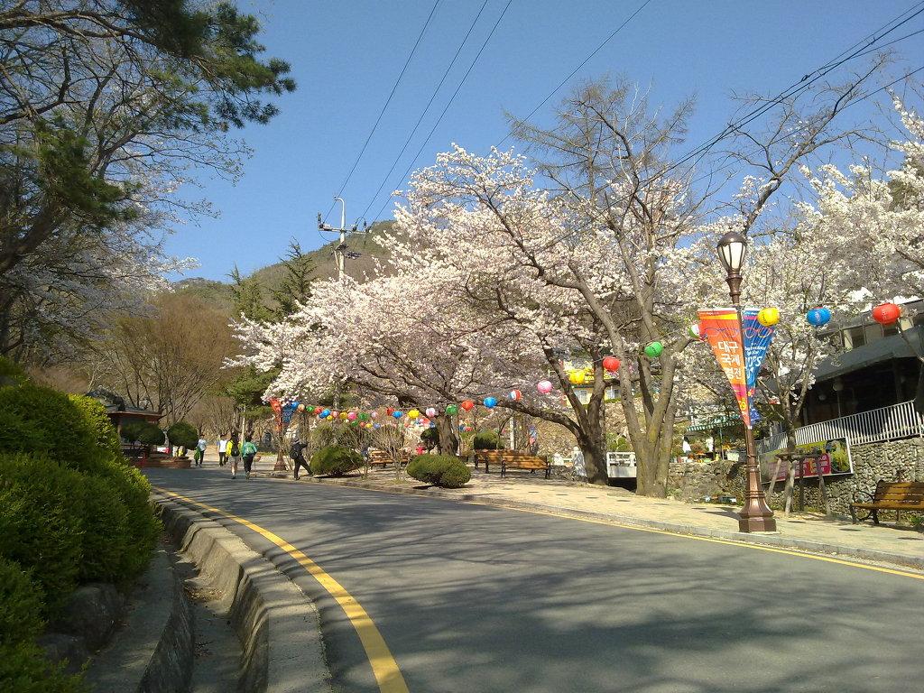 팔공산 갓바위 공원 입구에 벚꽃이 핀 모습 by Ara