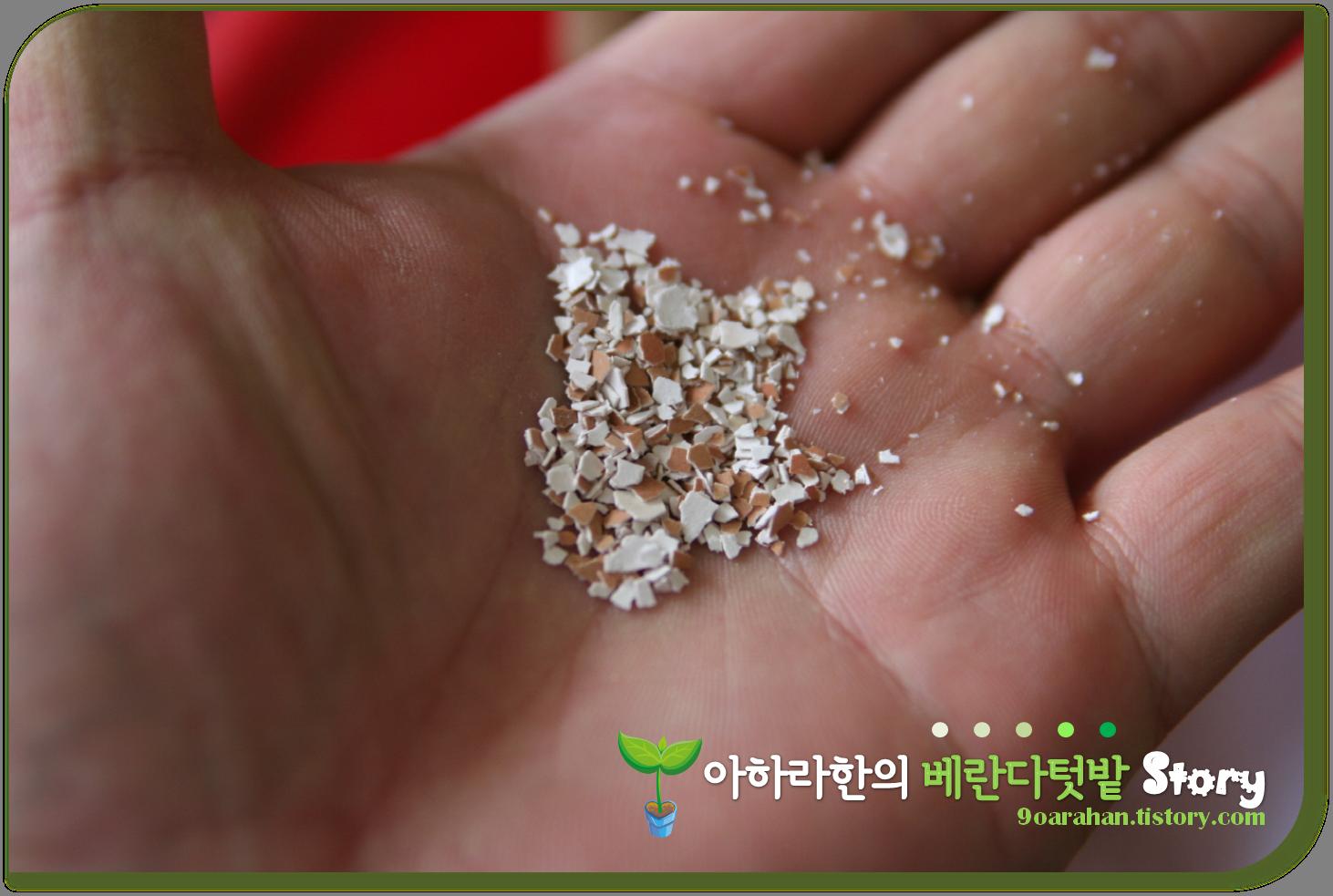 [계란껍질, 식초 액비] 계란껍질과 식초가 화분비료? 계란껍질 활용한 천연비료만들기!