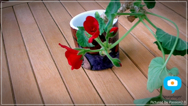 [HMX-Q10] 인터벌레코딩으로 꽃이 피는 순간을 담다