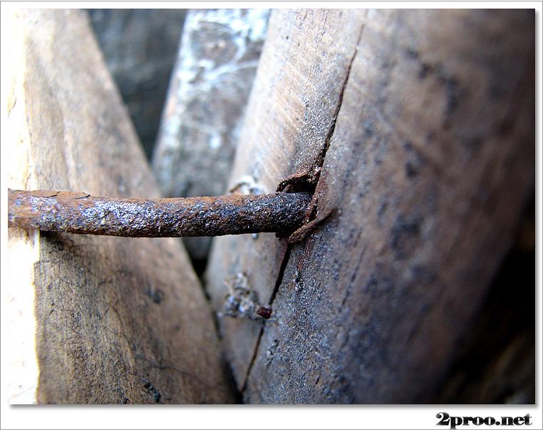 못박힌 나무 사진