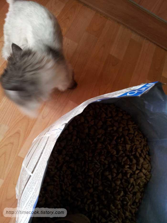 로얄캐닌 인도어 10kg, 로얄캐닌 인도어 후기, 실내 고양이를 위한 사료, 고양이 사료 리뷰, 로얄캐닌 사료 후기, 로얄캐닌 인도어27