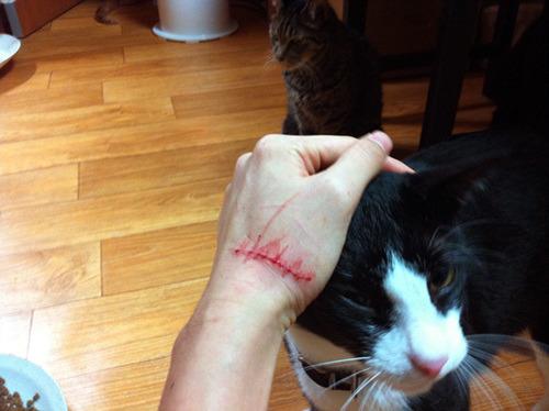 Cat S Cradle 피바람을 일으킨 고양이