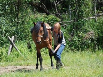 우리 말을 조련하고 있는 미국의 케이티