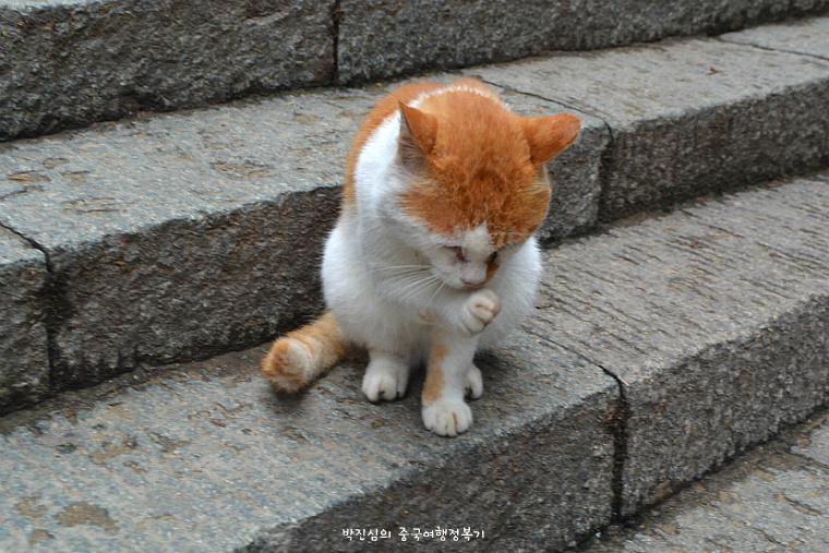 태산 고양이
