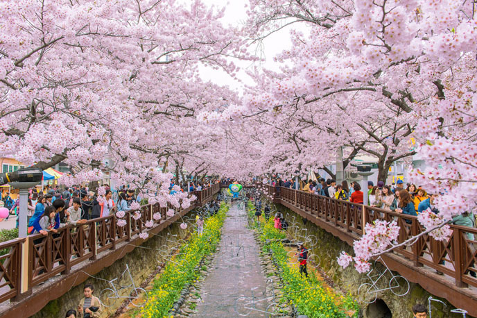 2016 벚꽃축제 ① 진해 군항제