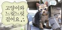 고양이와 느릿느릿 걸어요
