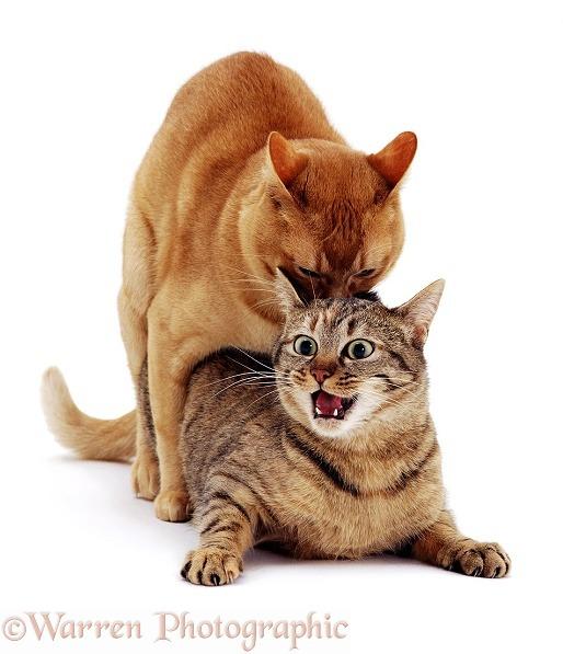 Warrior Cats Rape Fanfiction
