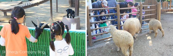 염소와 양에게 먹이를 주는 아이들의 모습입니다.