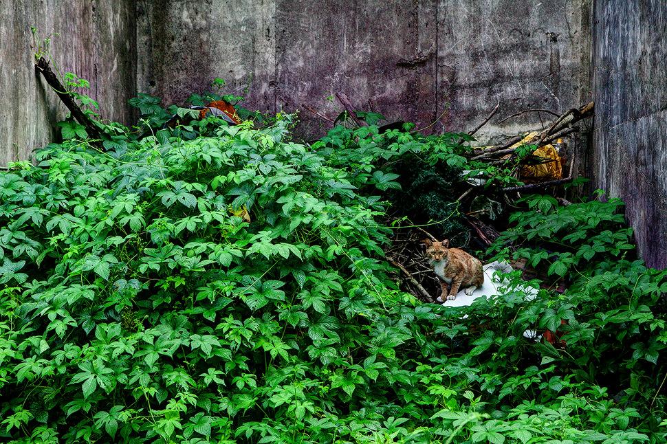 이제는 찾지않는 놀이터에는 잡초가 우거지고 집없는 고양이의 쉼터가 되어있었다.