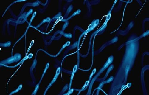 정자 정액 sperm swim