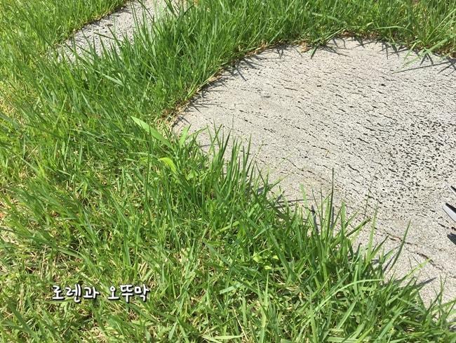 보쉬 충전용 잔디깎기! 모서리 잔디가 시원하게 제거되네18