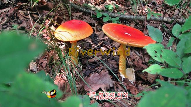 빨간색 버섯
