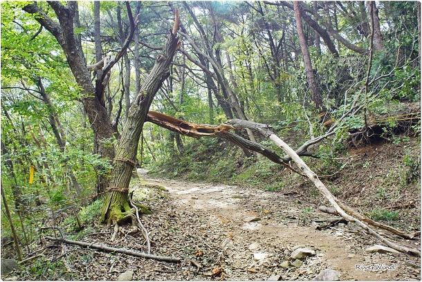 장군봉 가는길에 쓰러진 나무