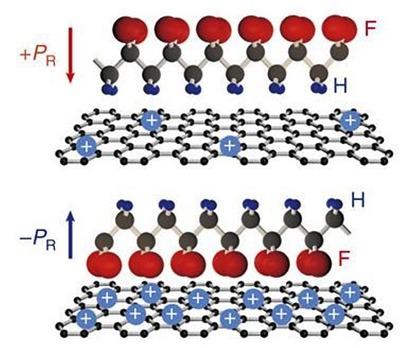 강유전체에 의해 그래핀에 비휘발적 도핑이 되는 모식도. 전기 음성도가 작은 수소(H)와 전기음성도가 큰 불소(F)로 이루어진 영구 쌍극자가 인가하는 전압 극성에 따라 정렬함.