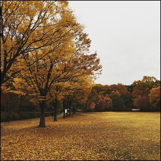 2015년 늦가을 중앙공원 산책