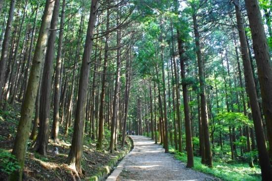 숲길 구경