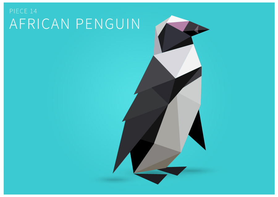 Piece 14 African penguin