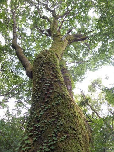 한라생태숲