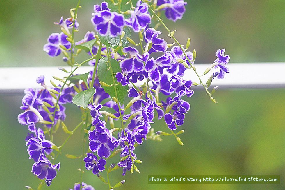 조화(造花)같은 진짜꽃