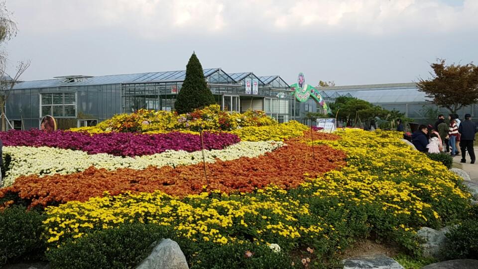 함평국화꽃축제