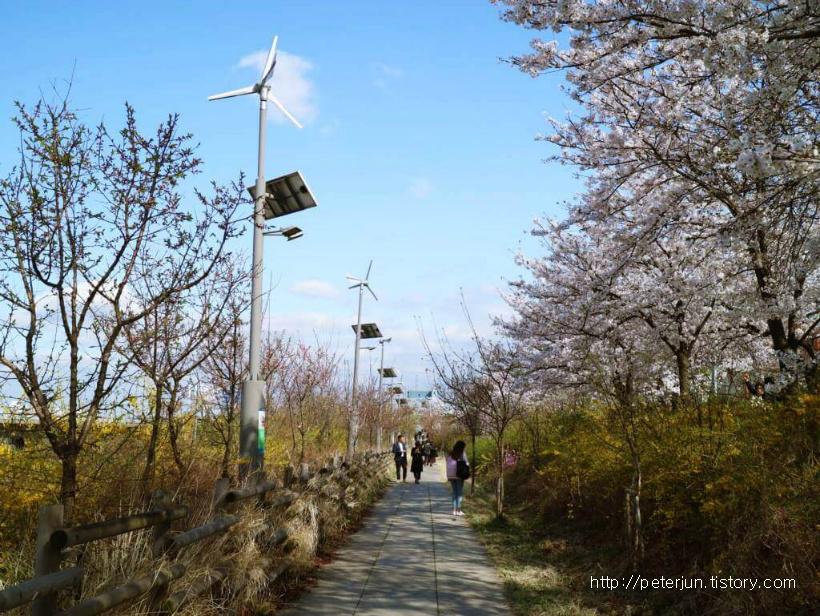 여의도 벚꽃 길