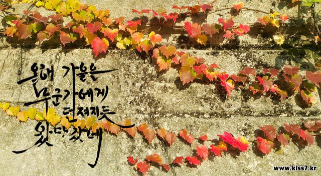 올해 가을은 누군가에게 던져지듯 왔다갔네. 울긋불긋 단풍잎 캘리그래피 손글씨 무료이미지