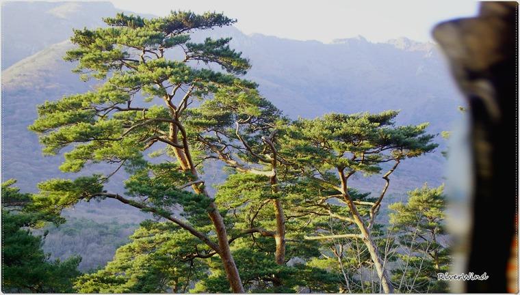 남산위에 저소나무