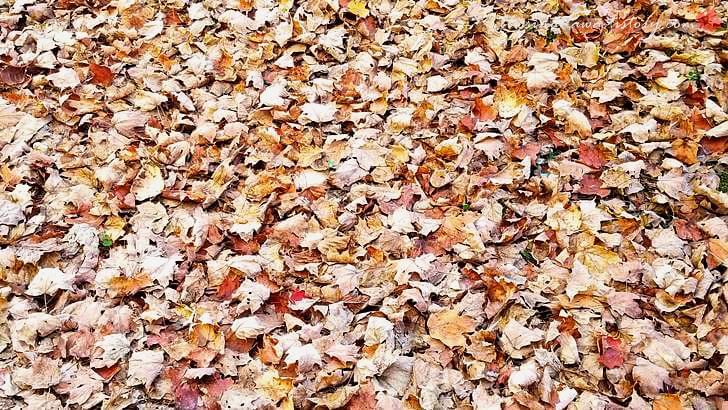 단풍 나뭇잎입니다