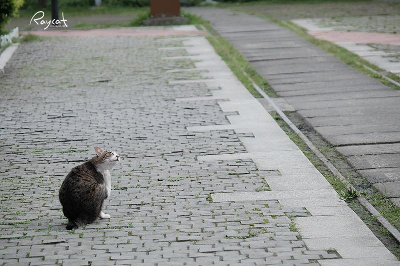 허우통 고양이 마을 턱 긁고 있는 고양이