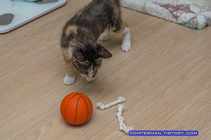 고양이 장난감 축구