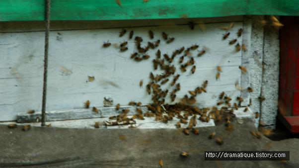 100 대 1로 싸워도 죽는 꿀벌::OmnisLog