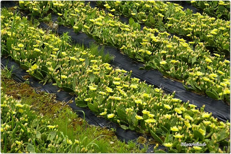 백년초 농장