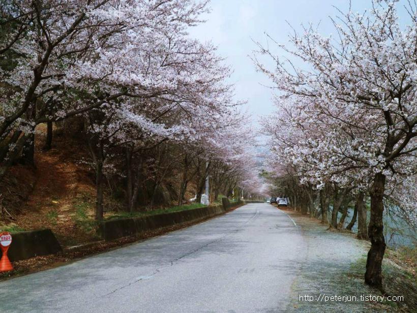 화사한 벚꽃길